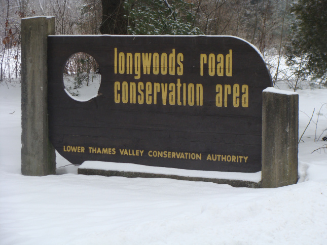 I have taken many walks on the trails at Longwoods