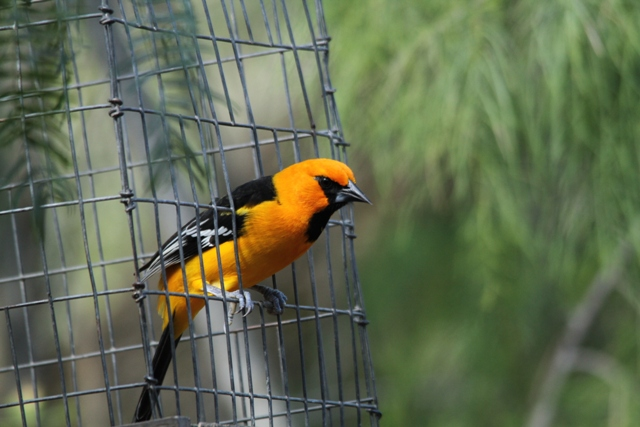 At a feeder cage